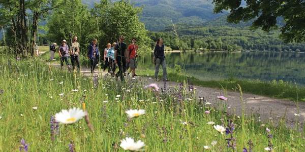 Botanical guidance along Lake Bohinj