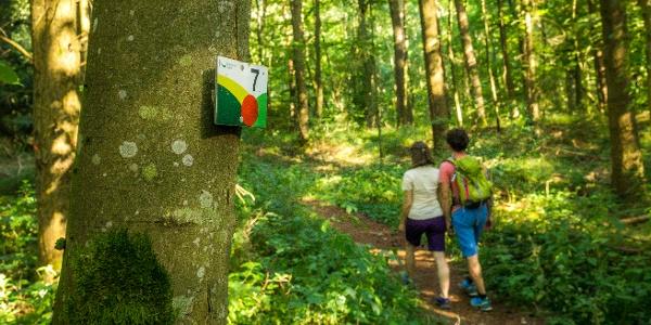 Pfad durch den Wald auf dem 7-Berge-Weg