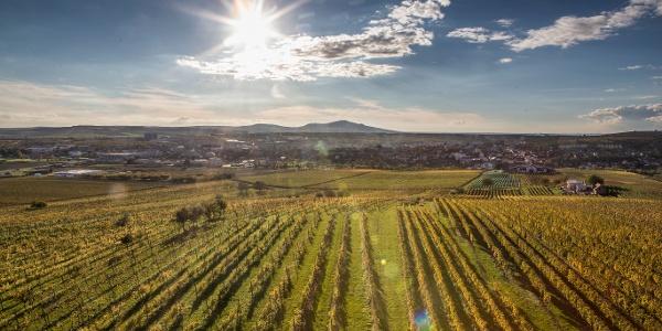 Pohled na vinice u Velkých Pavlovic