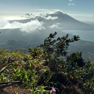Mitten hindurch der Vulkan Vegetation