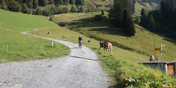 Mountainbike auf der Alp Lüsis