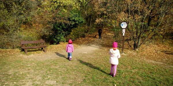 """A Ferenchegyi út végénél található parkolónál indul a """"Tükörben az élővilág"""" ösvénye"""