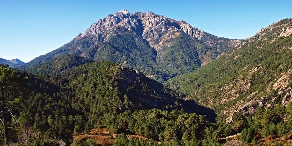 Monte d'Oro (2389m) und Teile des Waldes von Vizzavona