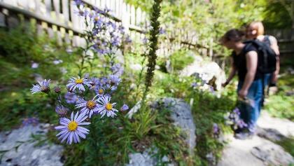Alpinum Juliana, botanischer Alpengarten