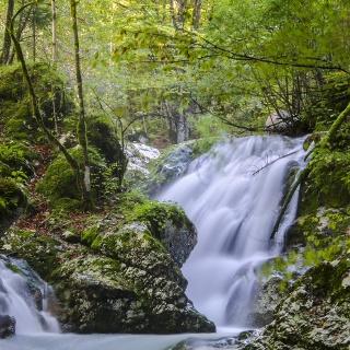 Rapids along the Šunik Water grove