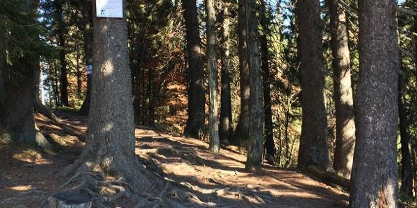 Abzweig zum Felsenweg durch den Bannwald
