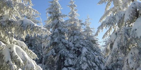 Blick auf verschneite Bäume