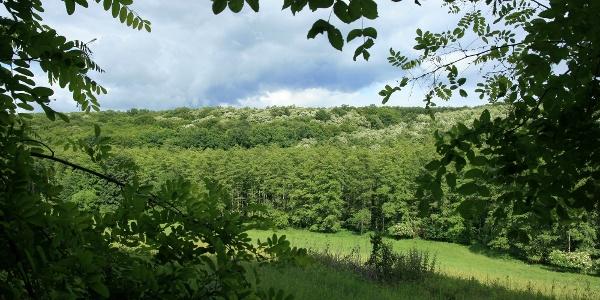 Sűrű erdők ölelésében üde rétekre lelünk