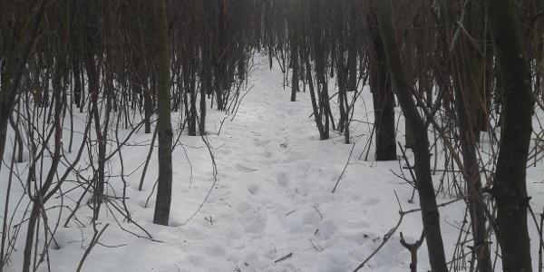 Hoch durch den Wald