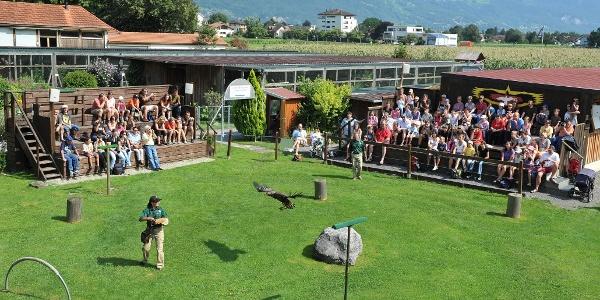 Eine Vorführung im Greifvogelpark Buchs ist einen Ausflug wert.