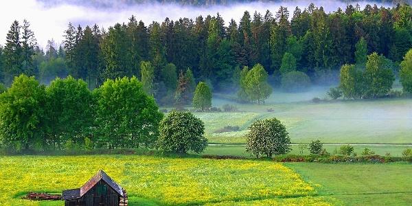 Dobel, Albrechthütte, Morgennebel, Frühsommer ©isocont GmbH
