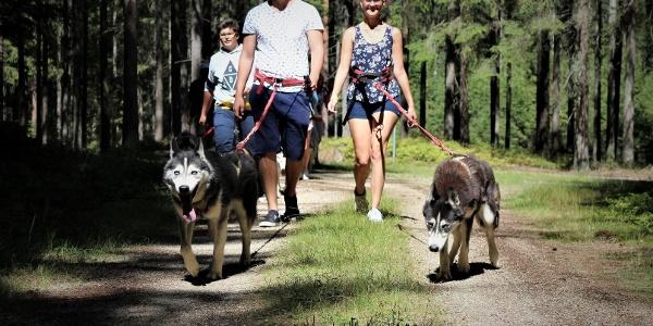 huskywanderung-husky-trekking-waldviertel-niederoesterreich