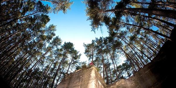 Wünderschöne Aussichten: Die Wernsbacher Steinbrüche, hohe Bäume und strahlend blauer Himmel.