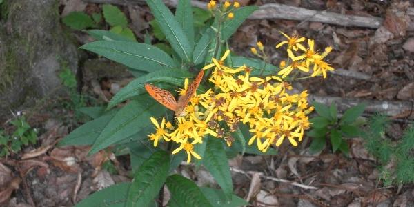 Blume am Waldboden