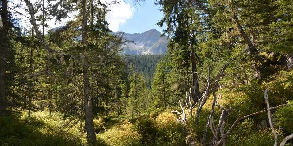 Durch das Naturwaldreservat Ebenschlag geht es hinauf zur Gamshütte