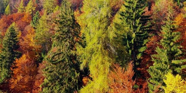 I boschi in autunno salendo verso la torbiera del Lago di Valda