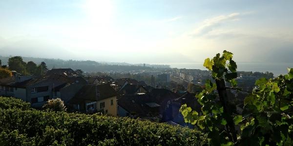 Blick von Corseaux Richtung Vevey.