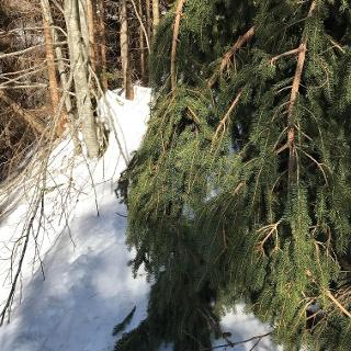 Aufstiegsspur im Wald