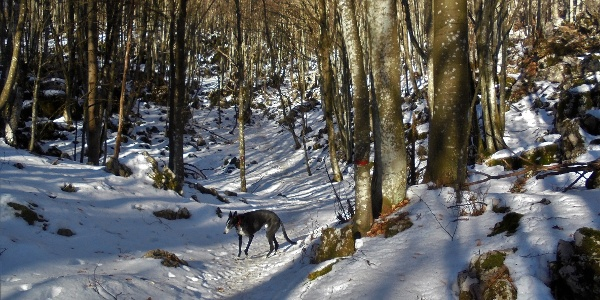 Nicely routed trail to Mt. Mrzli vrh