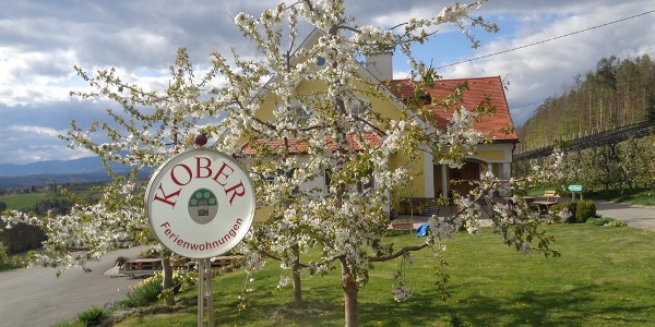 Kirschblüte am Apfelhof Kober