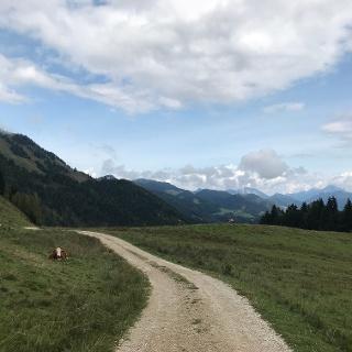 Walk through typical Alpine pastures