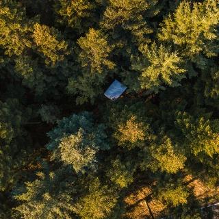 Wald von oben mit Kissen