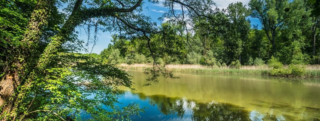 Rheinauen auf dem Treidlerweg