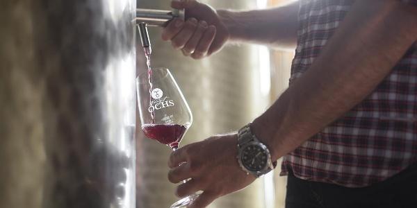 Weingut Ochs2