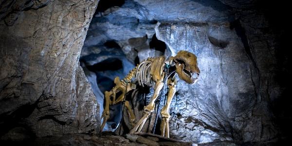 Höhlenbär (c) RegionGraz-Tom Lamm