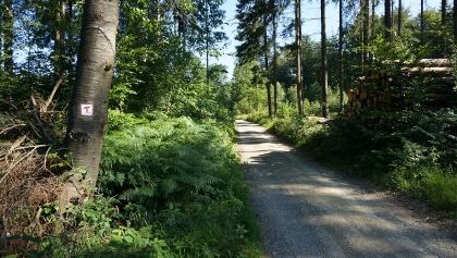 Breite Forstwege auf dem TERRA.track Limberg und Zeppelinstein.