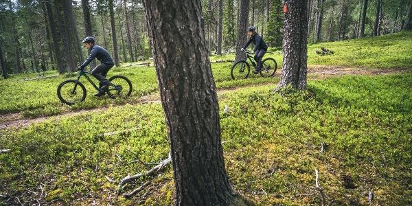 Der Wald in der Nähe von Rykimäkuru.