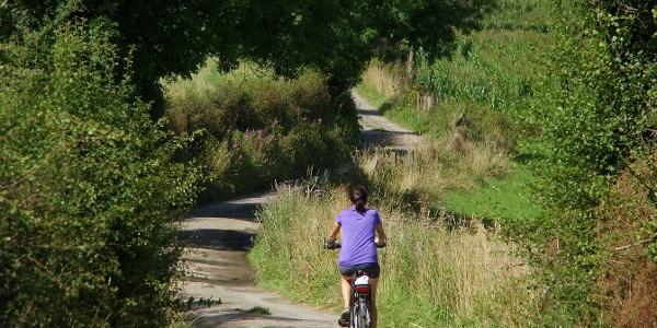 Radfahren in Bütgenbach