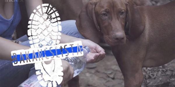 Kéktúra, 19. rész: Kutyafalkákkal a Vértesben