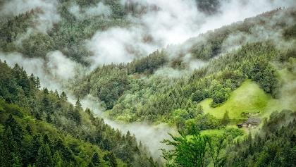 Nebel über dem Schwarzwald