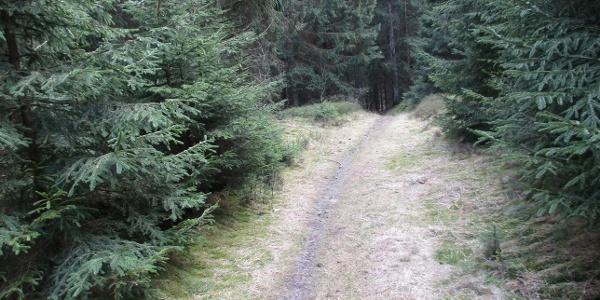 Trail hinab ins Innerstetal
