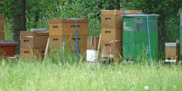 Bienenvölker am Kropsbachau Weg
