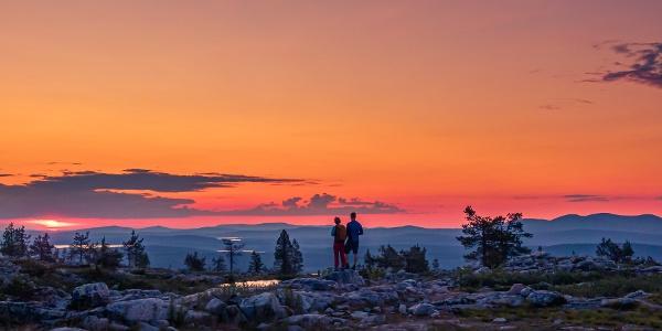 Särkitunturiin vievä 3 km pitkä helppokulkuinen kesäretkeilyreitti vie tunturi huipulle ihailemaan Pallastuntureille avautuvaa maisemaa.