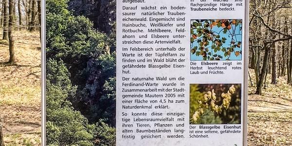 Information zum Naturwald im Bereich der Ferdinand-Warte