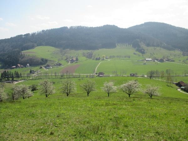 Ausblick vom Panoramaweg ins Welschensteinacher Tal