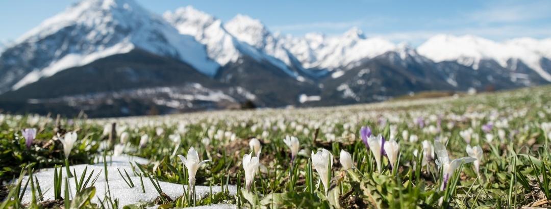 Frühlingserwachen im Unterengadin
