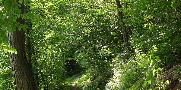 Holzhackerweg