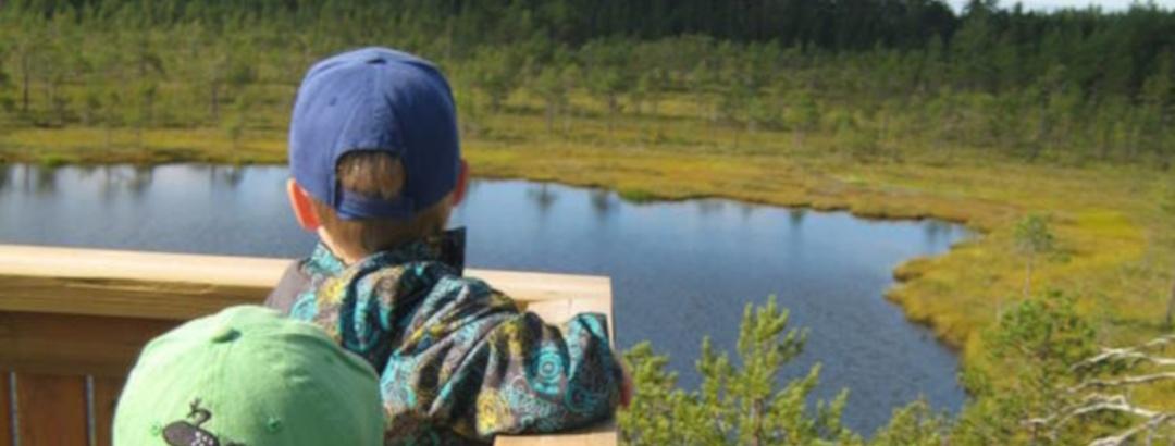 View in Leivonmäki National Park