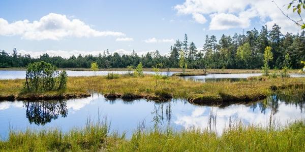 Das Hochmoorgebiet rund um den Wildsee bietet Idylle pur