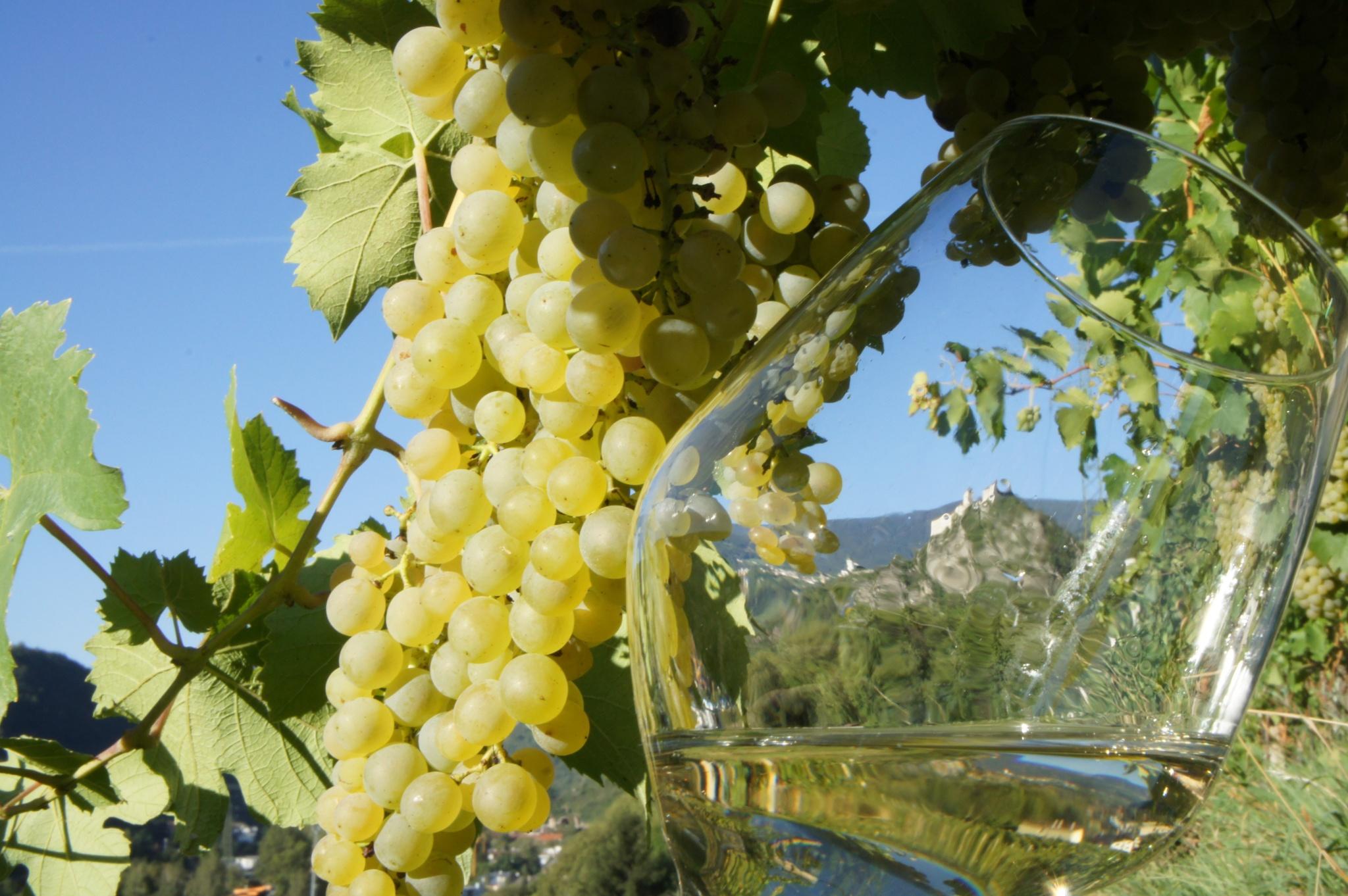 """Il """"Sentiero del Vino"""" a Chiusa • Escursione » outdooractive.com"""