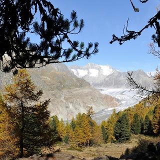 Wanderung von der Riederalp durch den Aletschwald zu den Chatzulechern