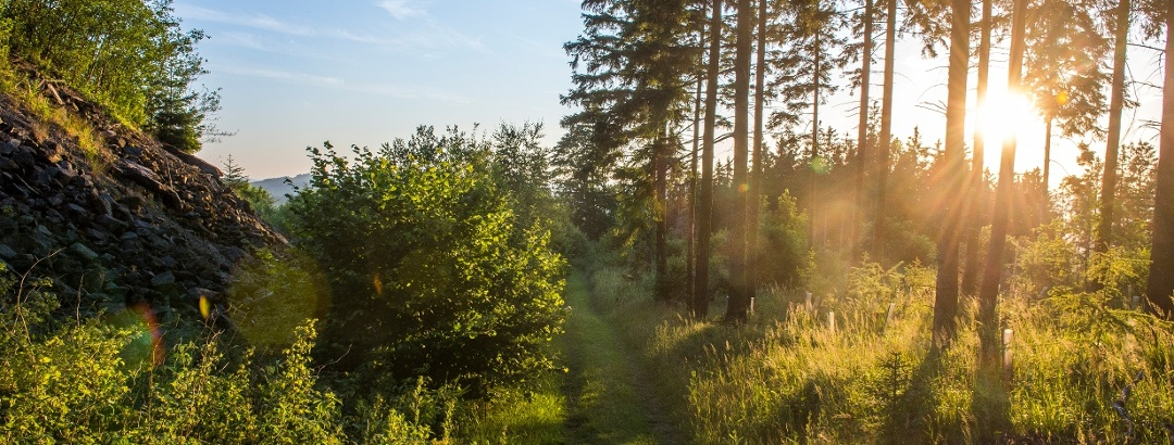 Der Briloner Wald