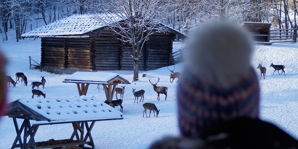 <![CDATA[Wildtiere im Nationalpark Berchtesgaden beobachten]]>