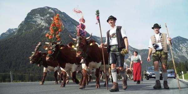 Almabtrieb beim Bergbauernhof Freidinglehen in Ramsau bei Berchtesgaden