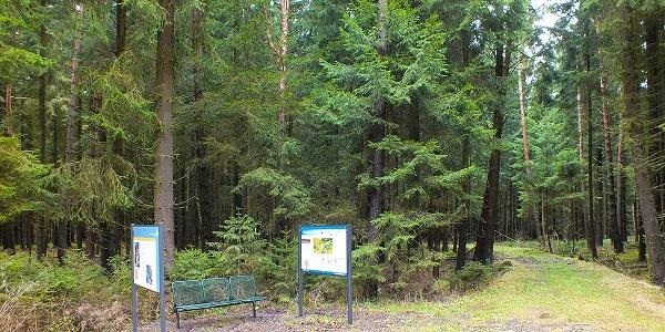 Infopunkt Neualbenreuther Maar