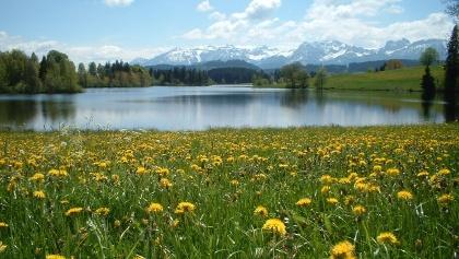 Der Schwaltenweiher bei Rückholz im Frühling